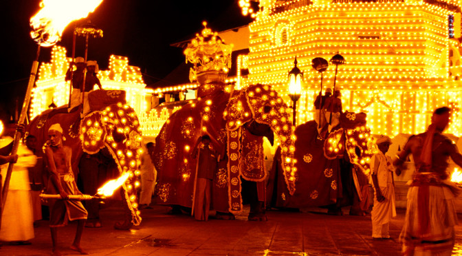 Kap-planting-for-Kandy-Esala-Perahera-on-15-August-SLToday